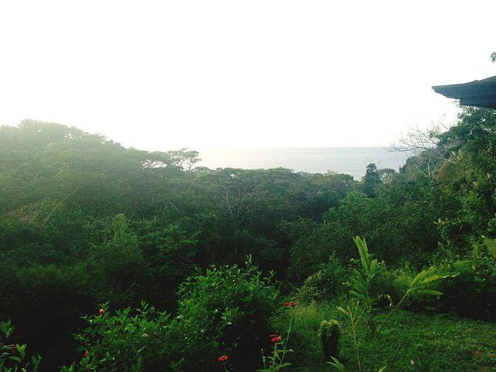 Amanece algo temprano por estos rumbos. Jungla Playa Uvita Costa Rica