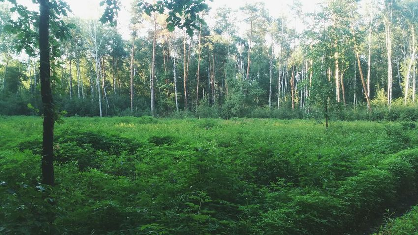 Walking Around Forest EyeEm Nature Lover Nature Nature_collection Summertime