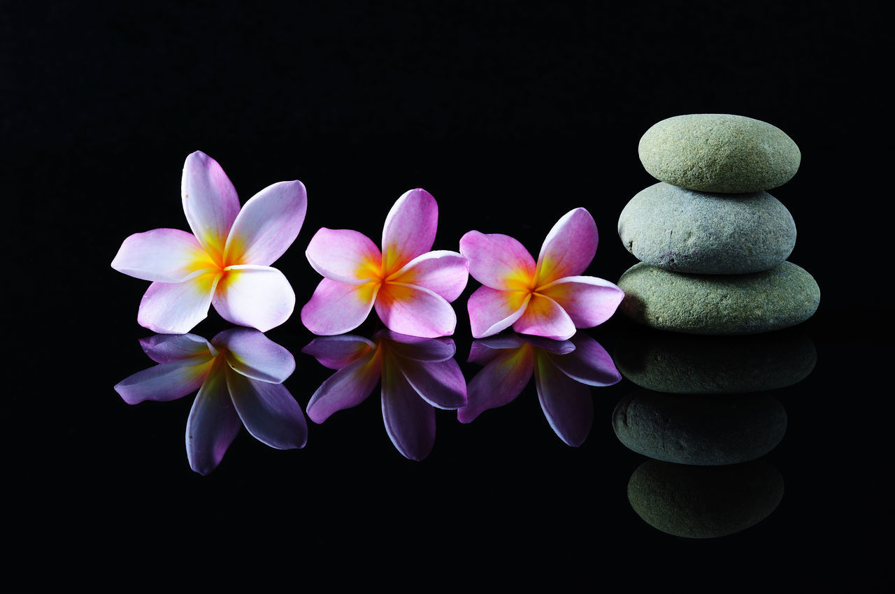 Spa, beauty and wellness concept - Frangipani flowers on a zen stones with reflection, dark background. Backgrounds Black Background Calmness Close-up Flower Flower Head Fragility Frangipani Freshness Nature No People On Black Petal Purity Reflection Relaxation Spa Stacked Wellness Yoga Zen Zen Stone