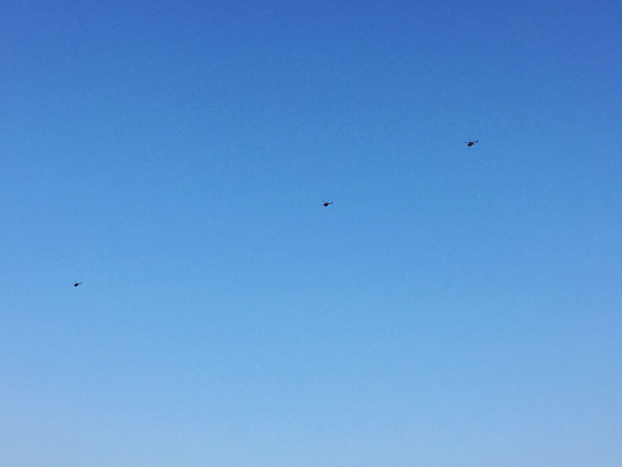flying, blue, copy space, bird, clear sky, mid-air, low angle view, animals in the wild, animal themes, outdoors, day, no people, nature, beauty in nature, spread wings, sky, paragliding