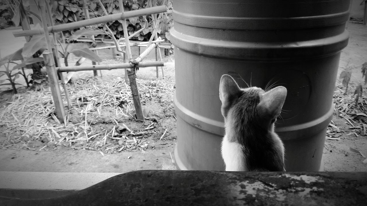 Cat Cat Lovers Catlover Lookingup Looking Into The Future Loking Somewhere