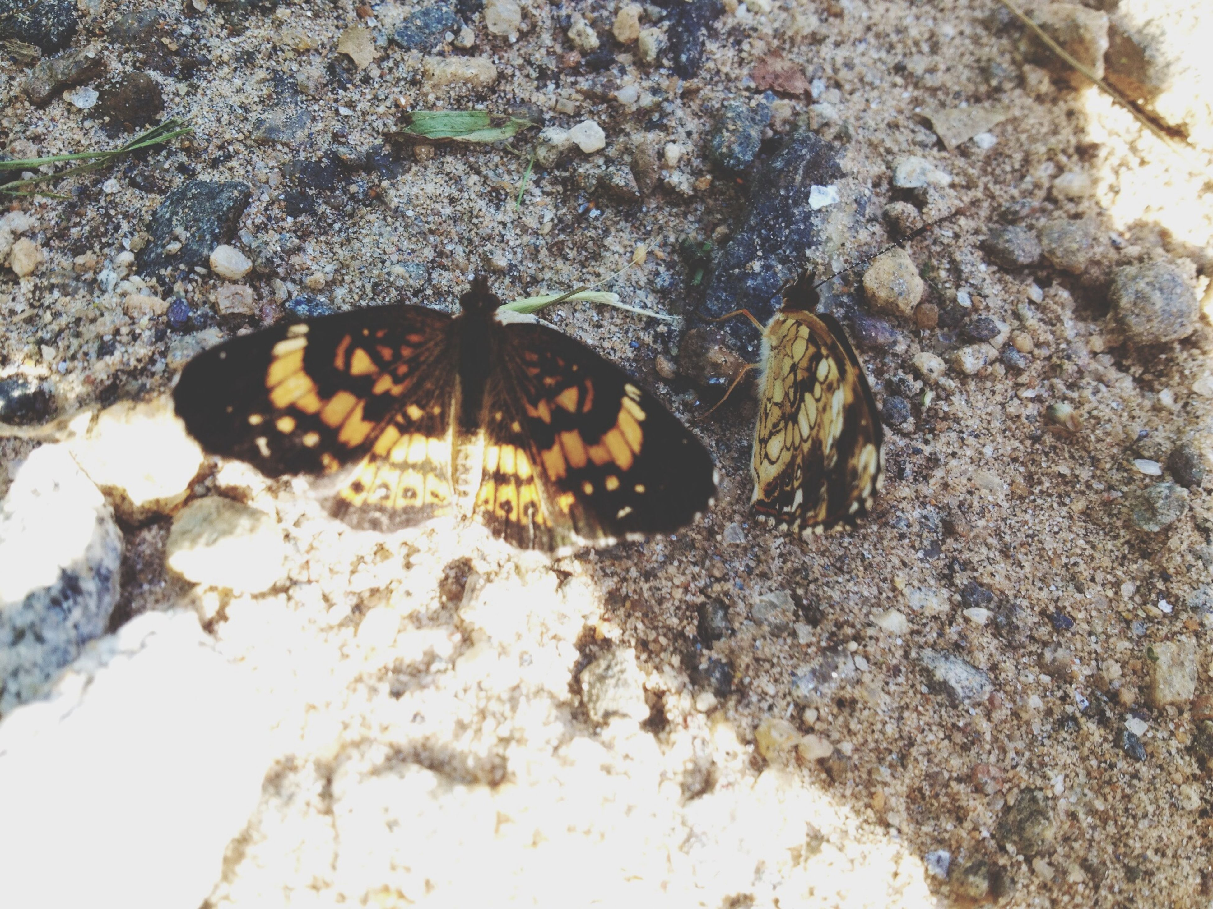 animal themes, animals in the wild, one animal, wildlife, insect, high angle view, rock - object, nature, zoology, animal markings, outdoors, close-up, day, butterfly - insect, full length, no people, two animals, selective focus, beauty in nature, natural pattern