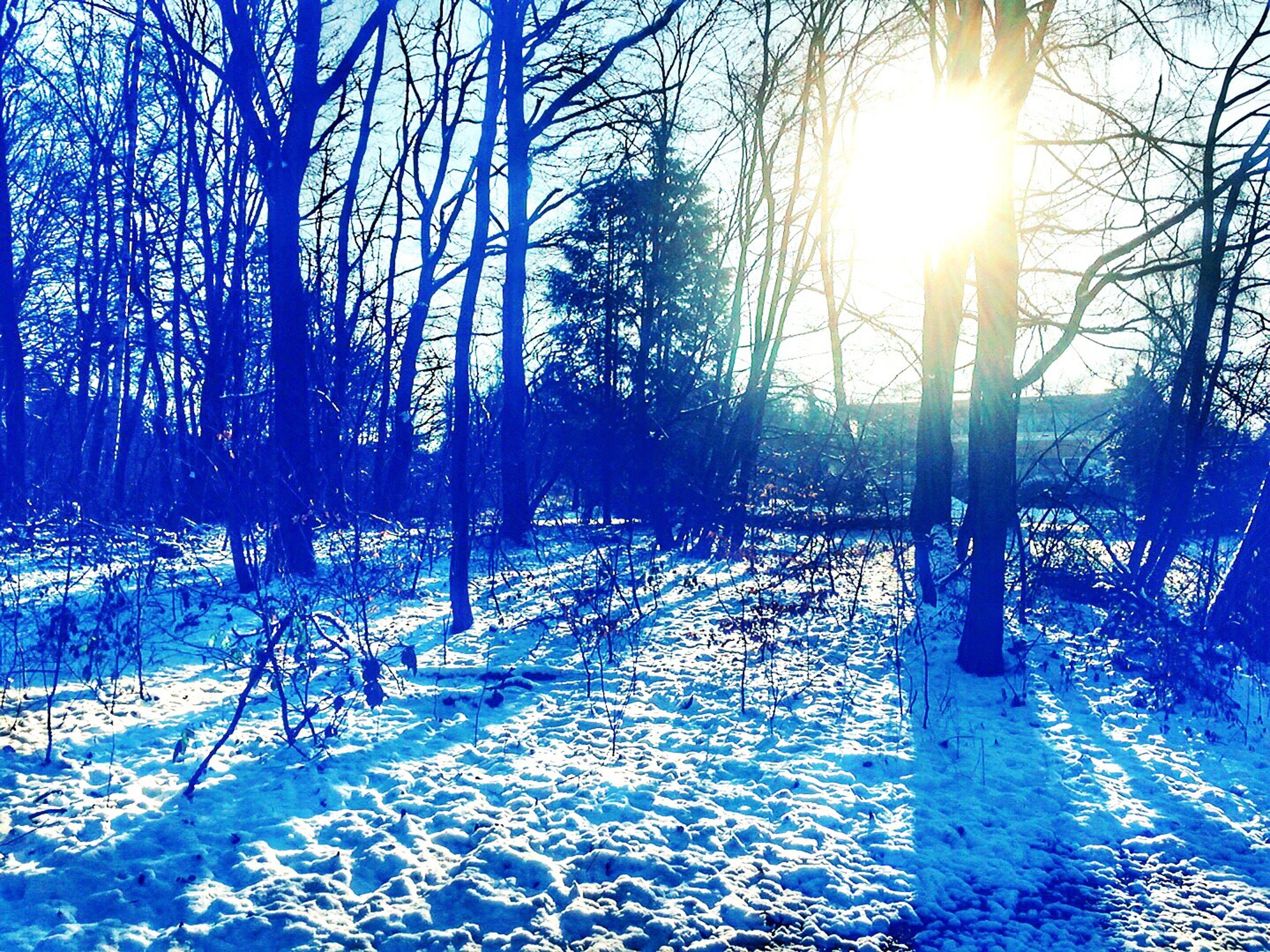 sun, winter, cold temperature, snow, sunlight, bare tree, tree, season, sunbeam, water, tranquility, nature, tranquil scene, lens flare, beauty in nature, scenics, shadow, bright, tree trunk, frozen