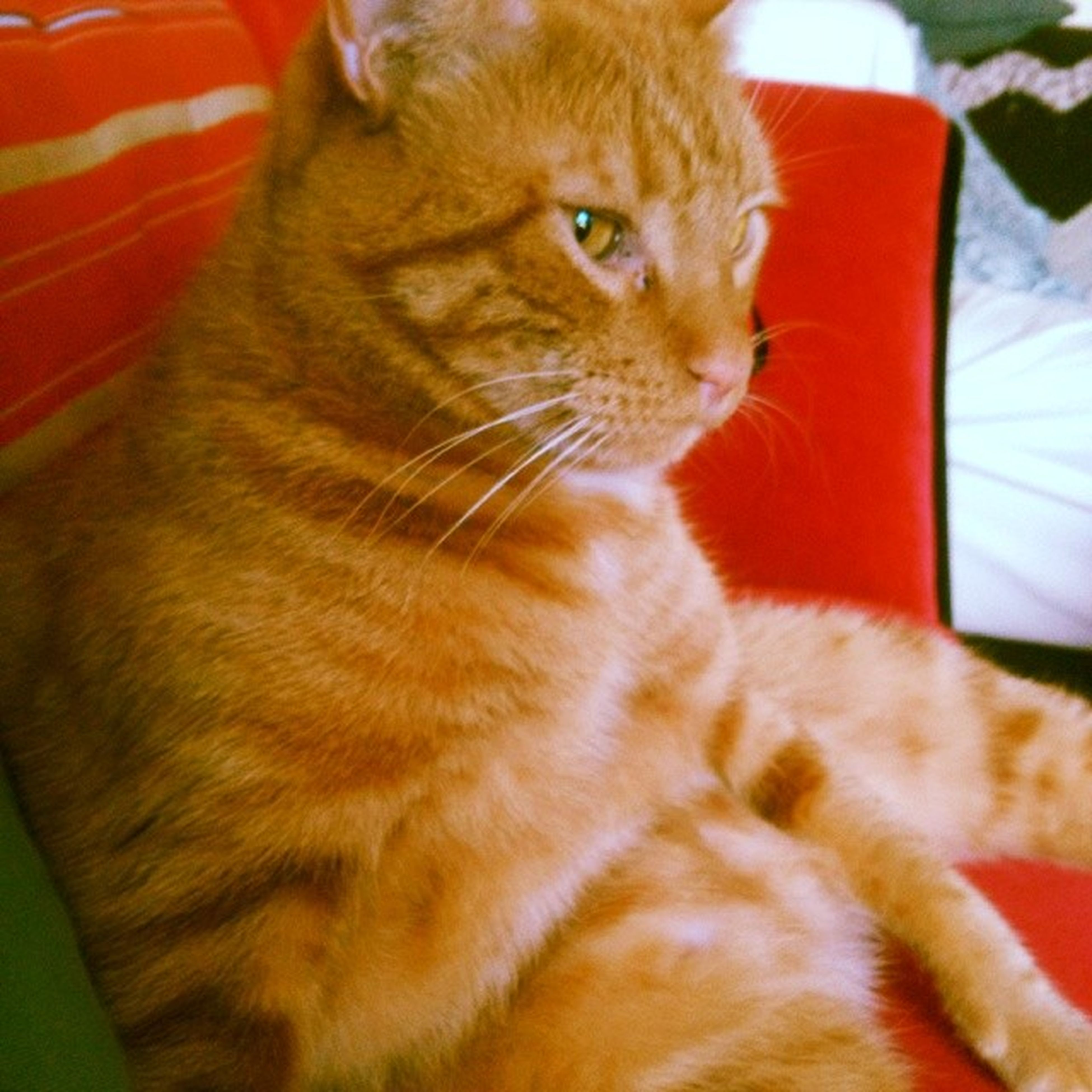 domestic cat, cat, feline, pets, one animal, animal themes, domestic animals, mammal, whisker, indoors, close-up, relaxation, looking away, orange color, alertness, animal head, no people, resting, tabby, home interior