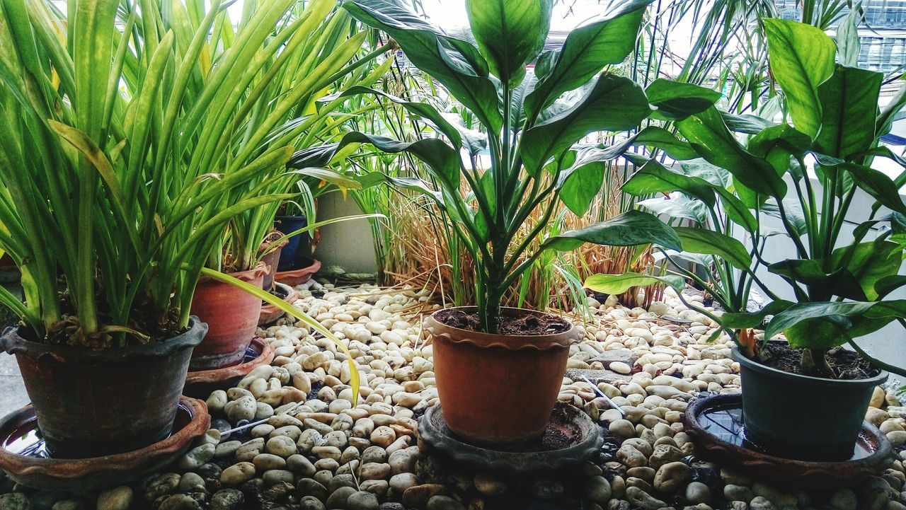 growth, potted plant, plant, no people, nature, day, outdoors, freshness