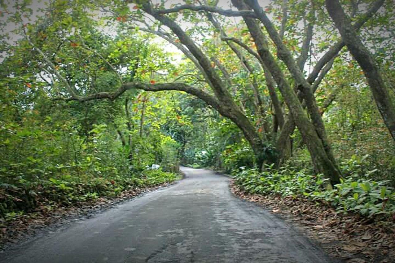 Woods Outdoors Maui Maui Hawaii Hawaii Mauiphotography Paradise Driving Road Tree Tunnel
