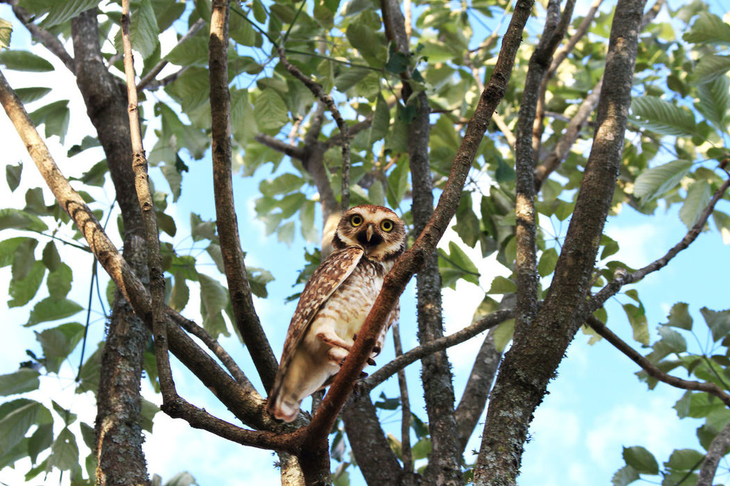 Tree Animals In The Wild Animal Themes One Animal Low Angle View Animal Wildlife No People Nature Owe Owl Owl Photography OWL Shoot Owls💕 Owllife