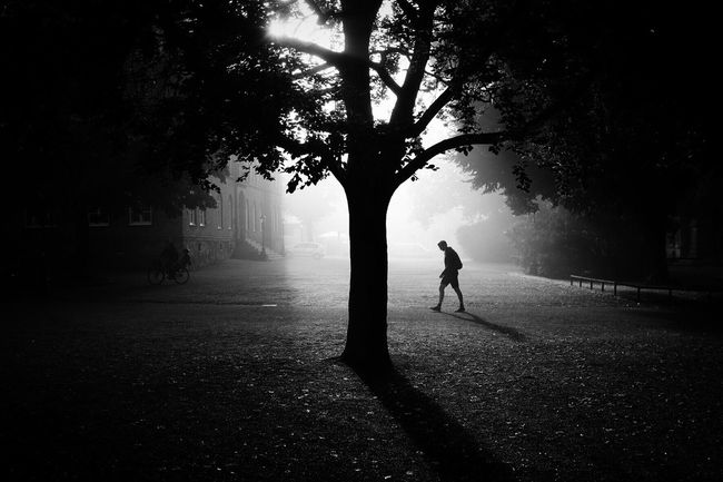 Tree Silhouette Solitude Tranquility Park Street Photography EyeEm Best Shots Darkness And Light Bw_collection Streetphoto_bw Monochrome