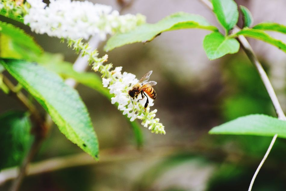 Insect Animals In The Wild Animal Themes Nature Growth Plant Flower Beauty In Nature Animal Wildlife Bee Insects  Insect Photography EyeAmNewHere EyeEmNewHere EyeEmNewHere