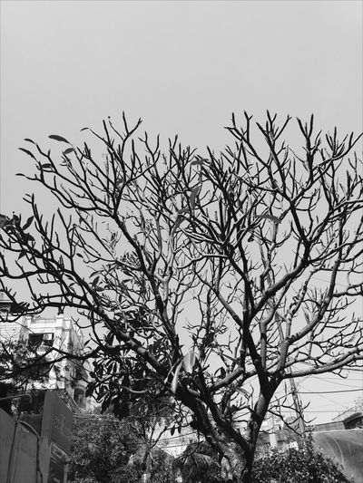 Outdoors Day Nature Flock Of Birds Bird Sky No People Low Angle View Growth Tree Beauty In Nature Animal Themes Backgrounds Nature_perfection Nature Photography Full Frame Nature Branch Growth Tree