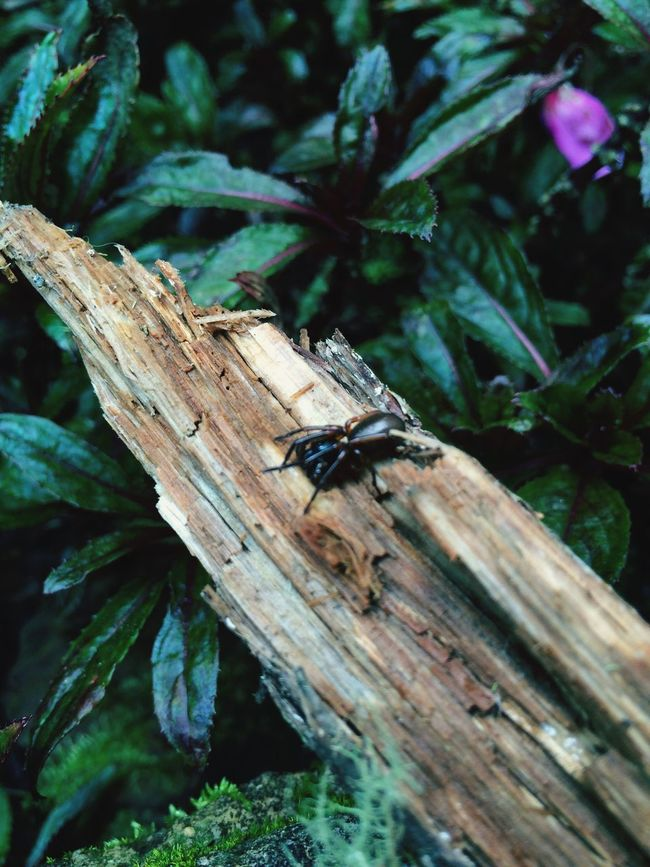 Check This Out Hanging Out Taking Photos Enjoying Life Insects Collection
