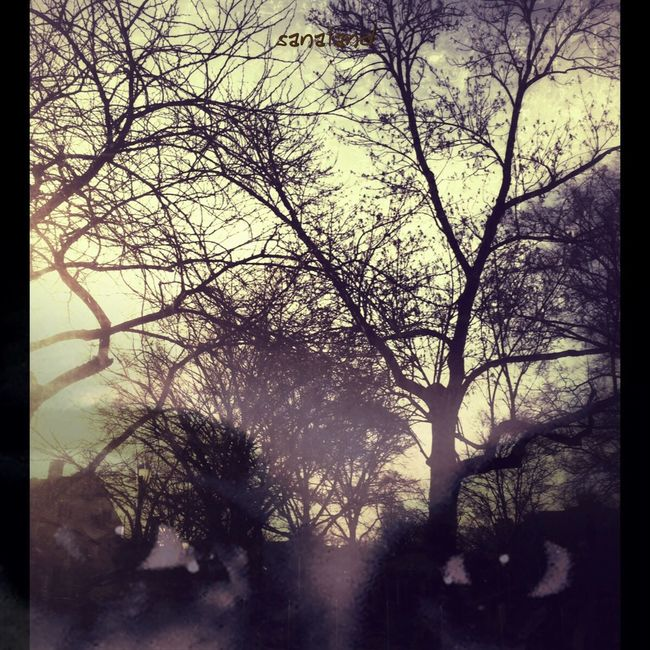 Enjoy the Silence Shadows EyeEm Best Edits Tree Junkie