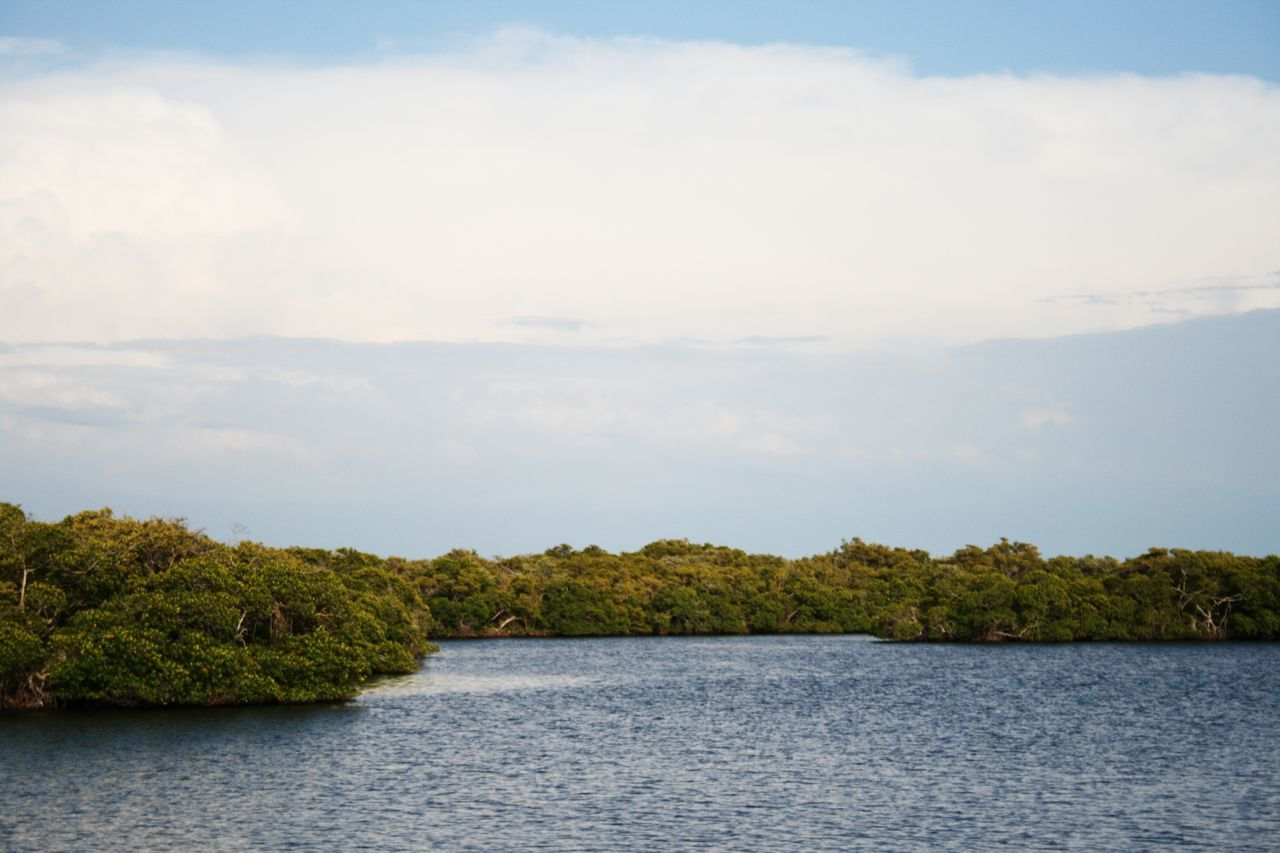 Tree No People Lake Cloud - Sky Outdoors Day Water Nature Sky Mangrove Mangroves Beauty In Nature