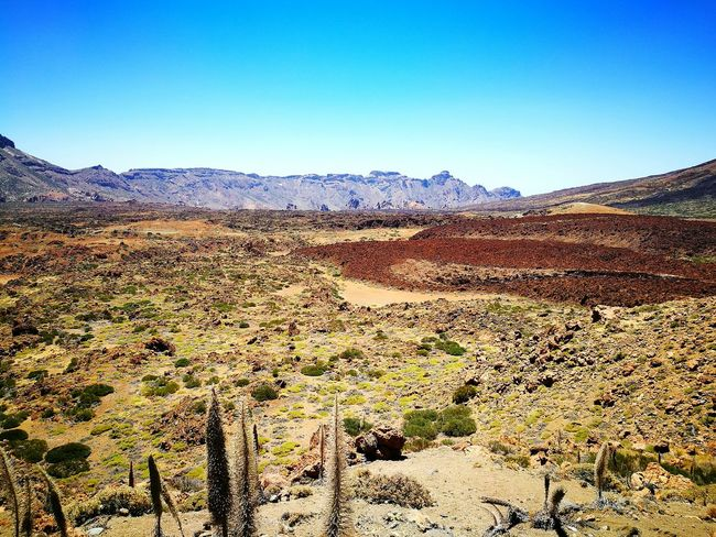 Volcano Caldera Teide National Park Teide Volcano Clear Sky Tranquil Scene Landscape Mountain Tranquility Scenics Non-urban Scene Blue Remote Nature Beauty In Nature Travel Destinations Geology Day Relaxing View Sunny Day Canary Islands Clear Sky Colourful Relaxation