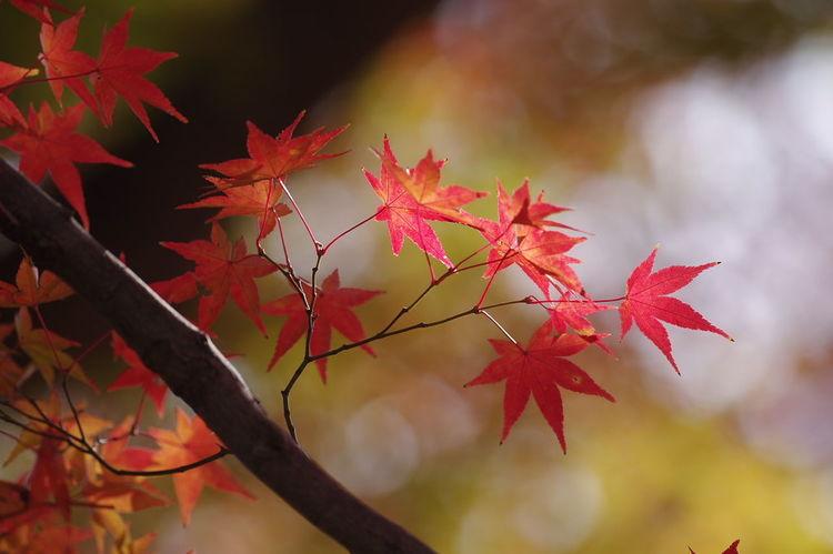 寂光院 犬山 もみじ寺 紅葉 紅葉🍁 Jakkoin Autumn Leaves Autumn🍁🍁🍁 Beauty In Nature Nature Nature Collection Nature Photography