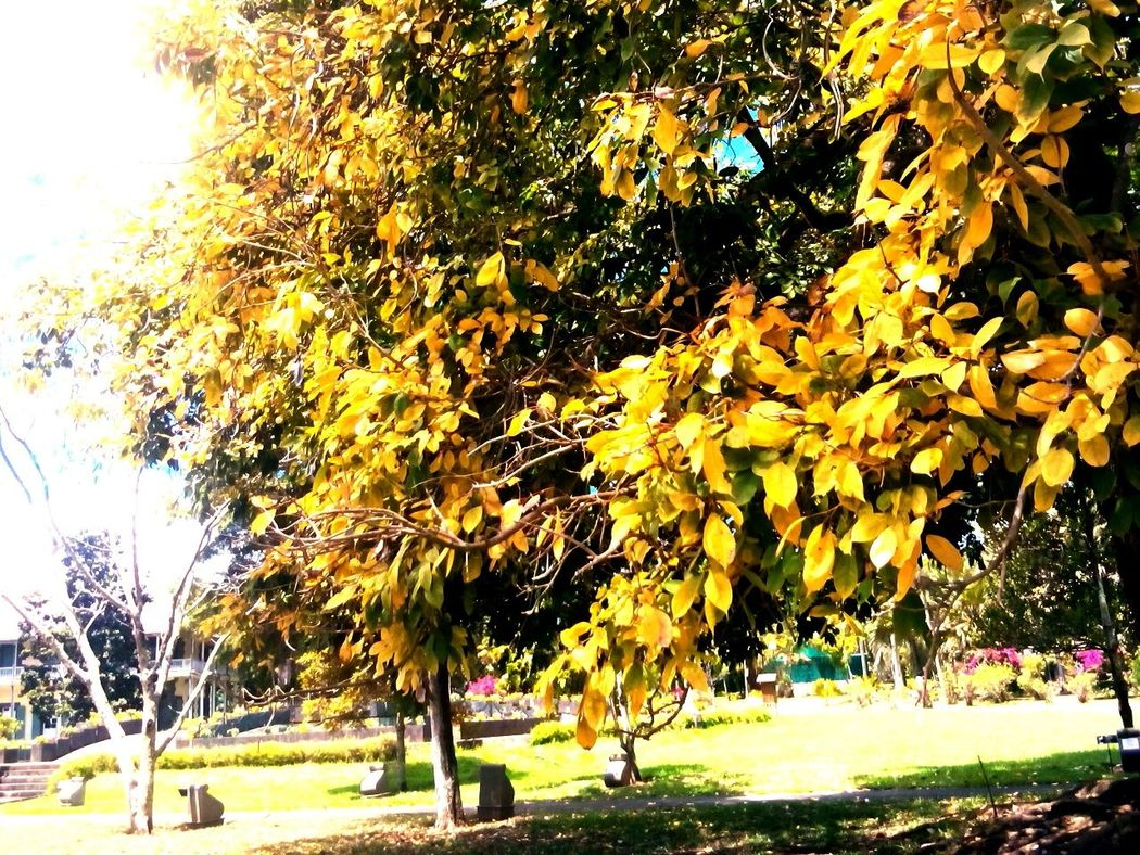 Hugging A Tree Yellow Leaves Tree_collection  Branches