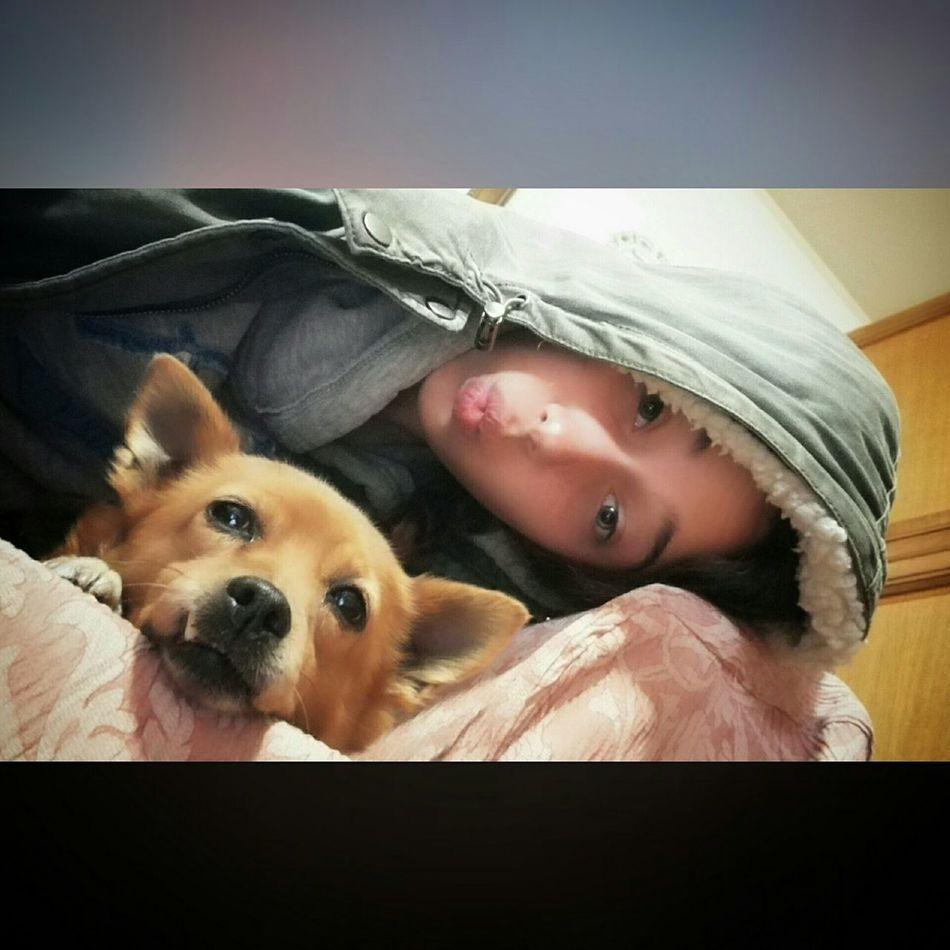 Hi! Hello World Relaxing Cuddles Iloveyou Dog❤ MyLove❤ Furia