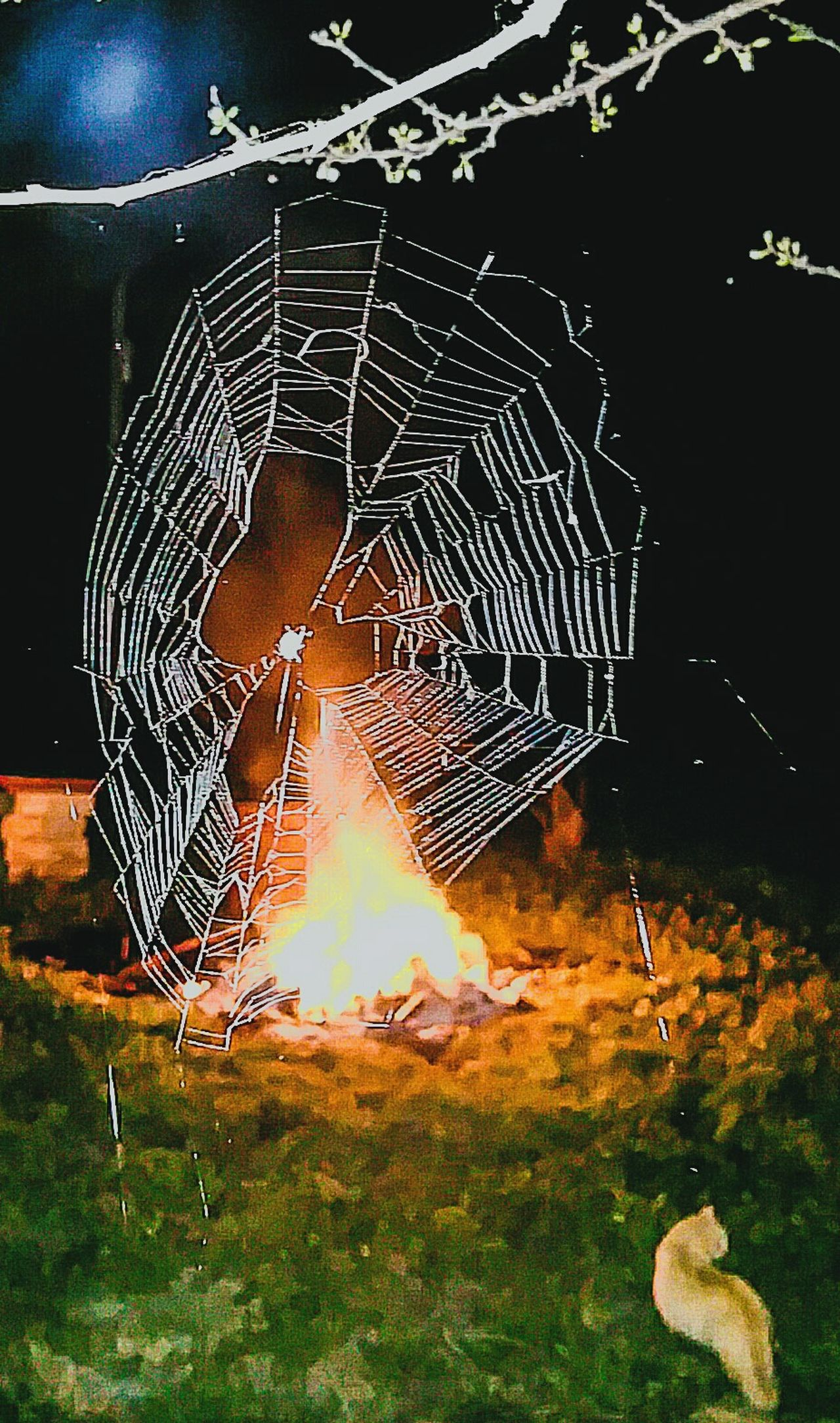 Night Sport Burning Outdoors Close-up Heat - Temperature No People Fire Flame Backgrounds Complexity Macro Glowing Arachnid Design Detail Insect Macro Spider Illuminated Night Insects Close Up Web Spider Web Backlit Fire Background