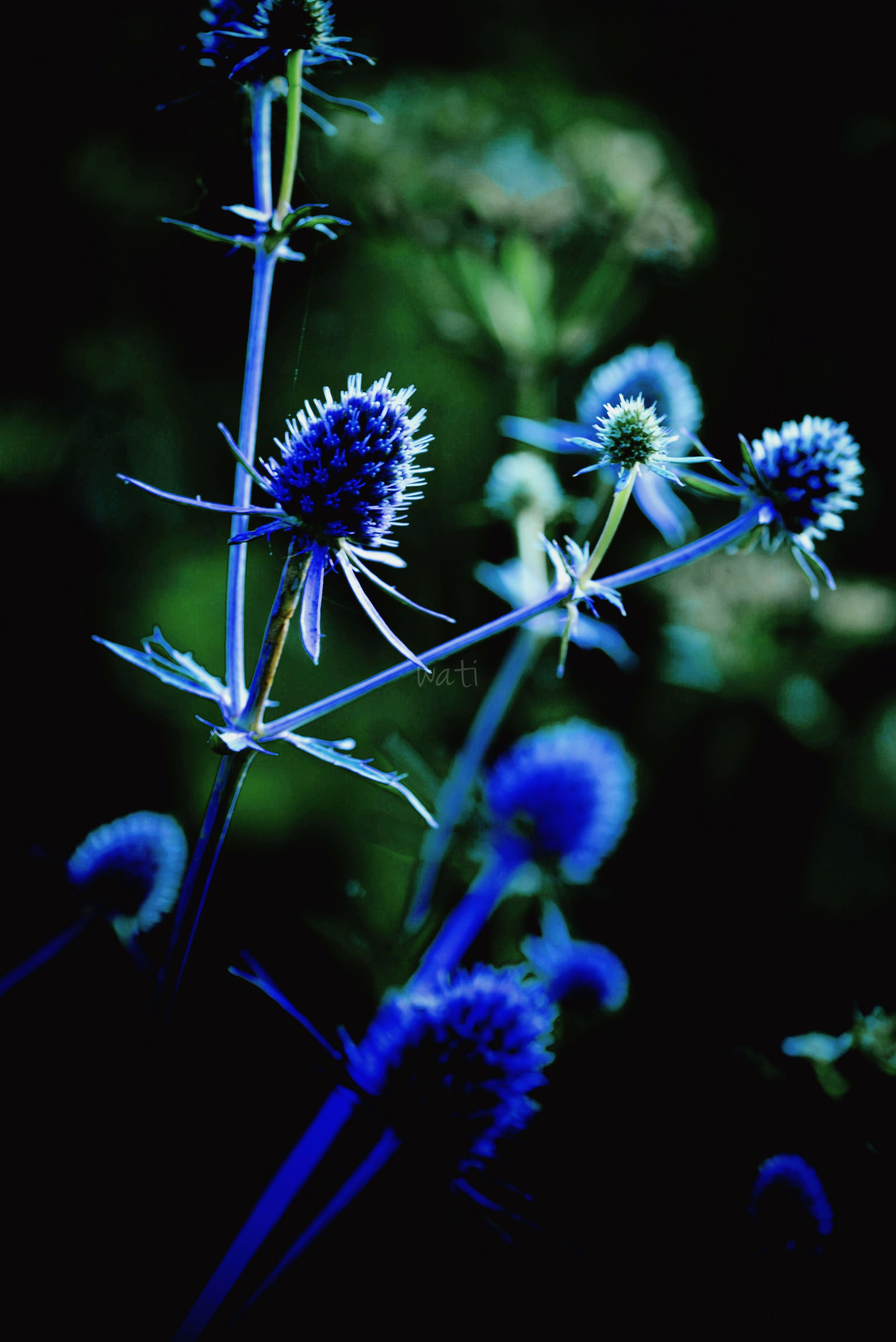 flower, growth, freshness, fragility, purple, close-up, focus on foreground, plant, nature, beauty in nature, stem, selective focus, outdoors, blooming, botany, blue, day, no people, leaf, in bloom