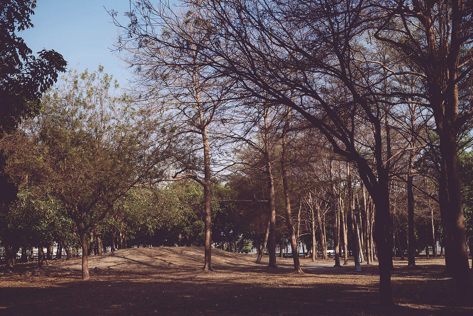 Beautiful stock photos of park, Bare Tree, Beauty In Nature, Day, Environment