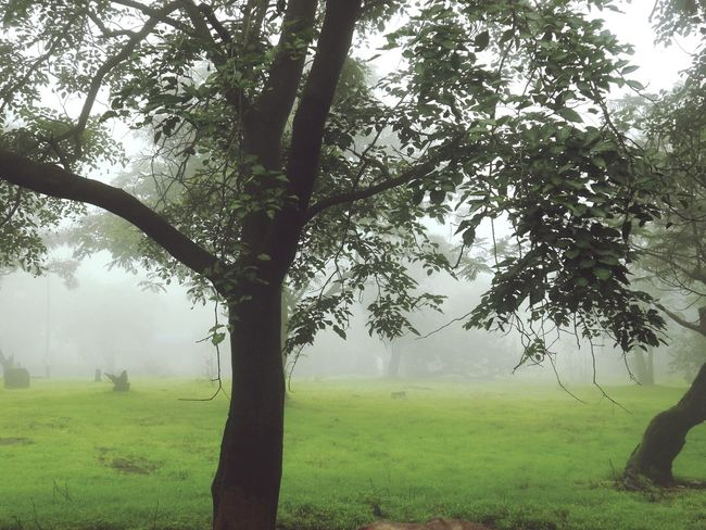 Check This Out Hanging Out In Love With Nature Lovely Another Click Relaxing In Love With Monsoon Hello World Cheese! Mumbai Grand