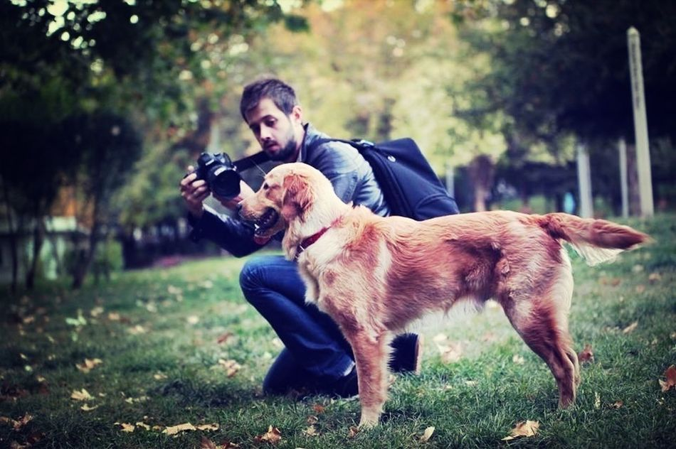 Goldenretriever Street Photography Dogs Beautiful