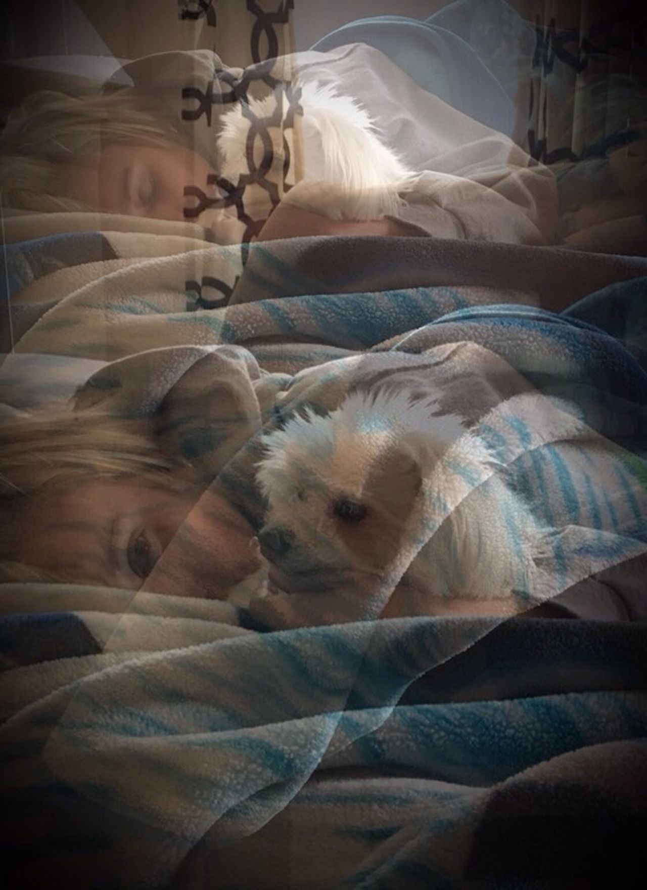 Domestic Animals Pets Dog Bed Relaxation Indoors  Animal Themes Mammal No People Bedroom Close-up Day Photographybybrookechanelle Snugglebuddy Sleeping Edited Artful Editing Experimental Photography Experimental Edit Photo Blending