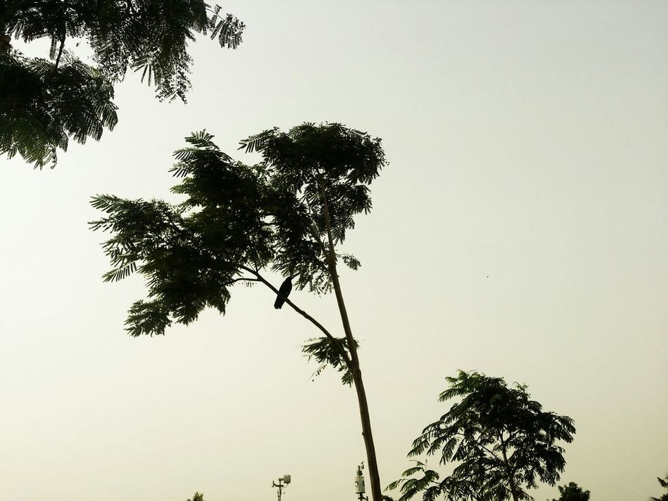 Taking Photos Hello World Check This Out See It Bird Tree