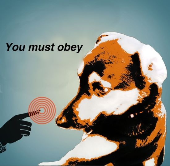 You Must Obey Dog いぬ  World Domination 世界制圧