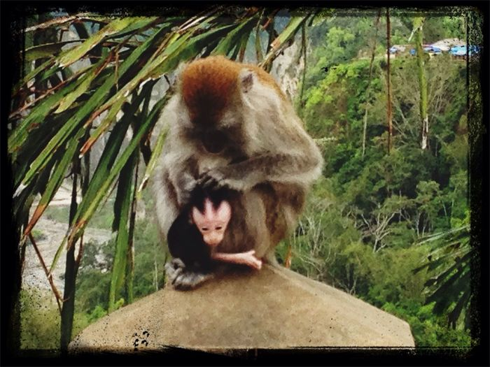 Monkeys Panorama Getting In Touch Animal Love