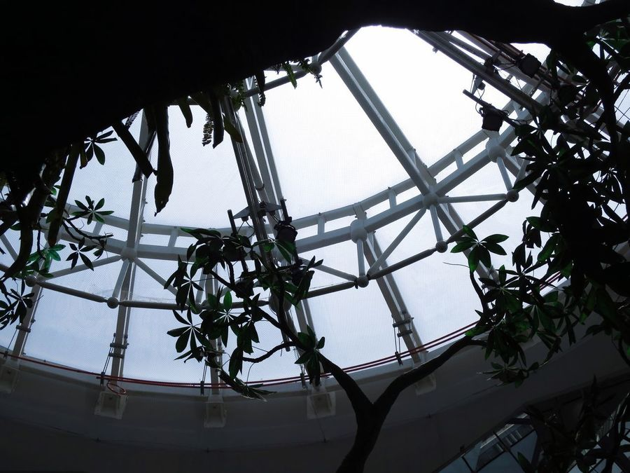 Fresh On Eyeem  Fresh Filter Low Angle View Sky Day No People Built Structure Indoors  Growth Architecture Plant Hanging Nature Roof Tree Clear Sky Greenhouse Beauty In Nature