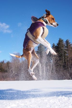 Jumping Piper. Always a joy. Everyday Joy Open Edit Dogs Of EyeEm Dog I Love My Dog The Moment - 2015 EyeEm Awards
