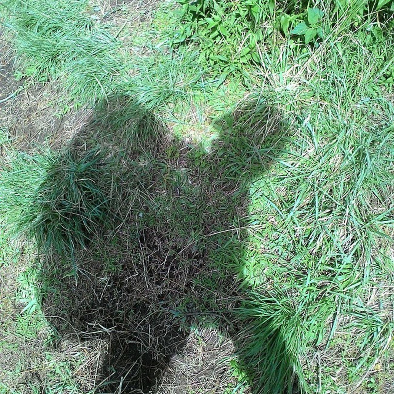 Mt.andong.1728mdpl shadow adventure . Zenfone Lingkarindonesia Selfietastic Exploremagelang Pendakigunung Styiles Mylife Mountains MyTripMyAdventure Indonesia_photography