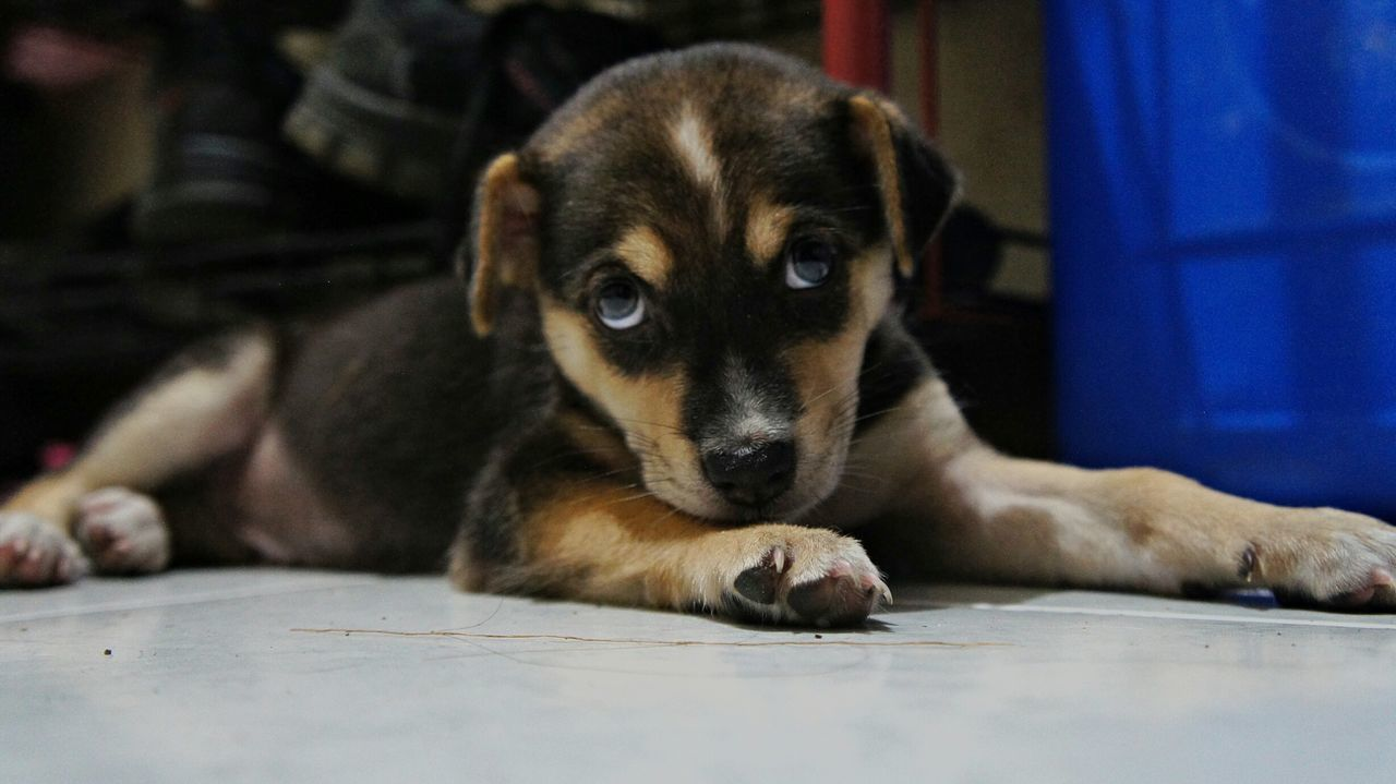 dog, pets, mammal, domestic animals, one animal, animal themes, puppy, indoors, no people, sitting, close-up, portrait, day