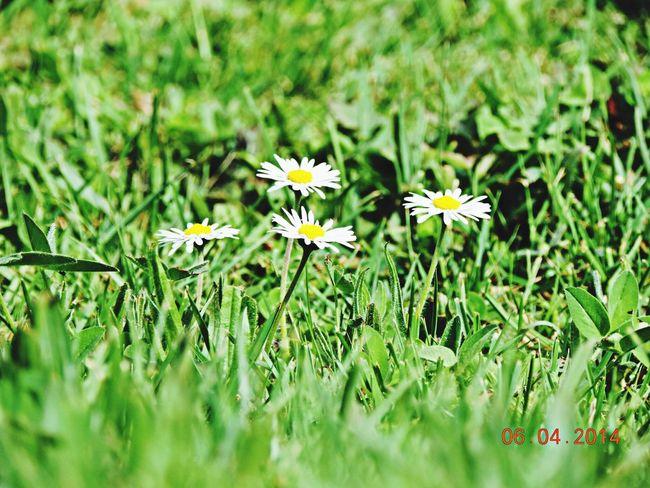 Flower Power ❤️ Spring Flowers Whispers Of Spring Spring