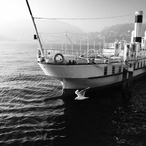 Traveling Home For The Holidays Bird Returning Home Returntoourorigins Italy Nautical Vessel