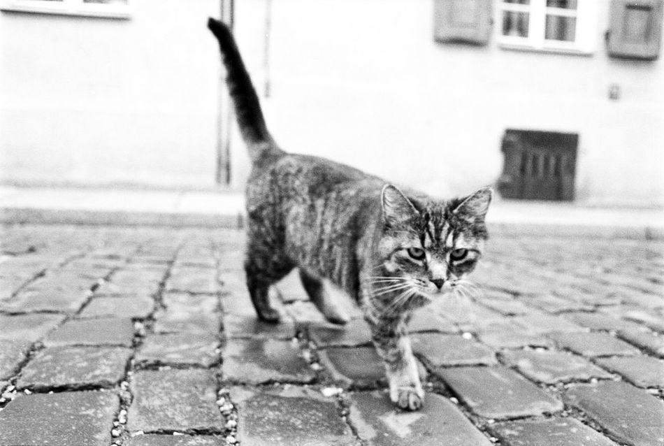 AgfaPhoto APX 100 (new) Black And White Blackandwhite Canon AE-1 Program  Cat EyeEm Best Shots - Black + White Kodak D-76 Monochrome Streetphoto_bw