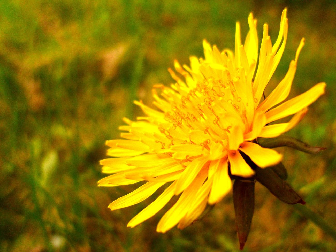 Flower Outdoors Day Flower Head Nature Yellow Plant Focus On Foreground First Eyeem Photo