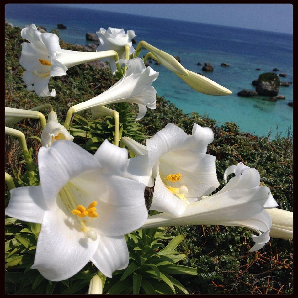 Flowers Ocean Sea