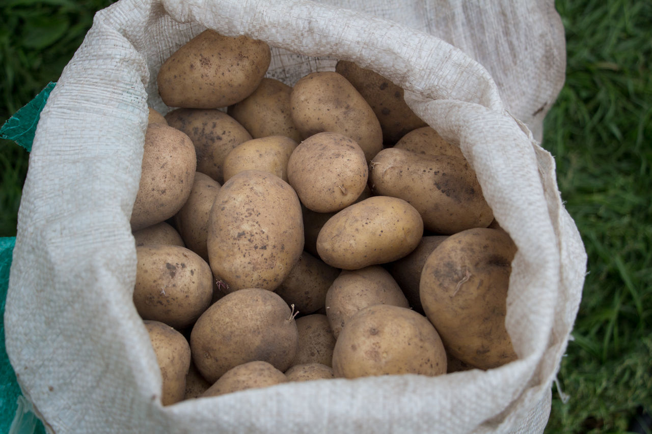 organic, healthy eating, food and drink, freshness, vegetable, food, raw potato, agriculture, raw food, no people, large group of objects, healthy lifestyle, close-up, nature, day, stack, sack, outdoors, food staple