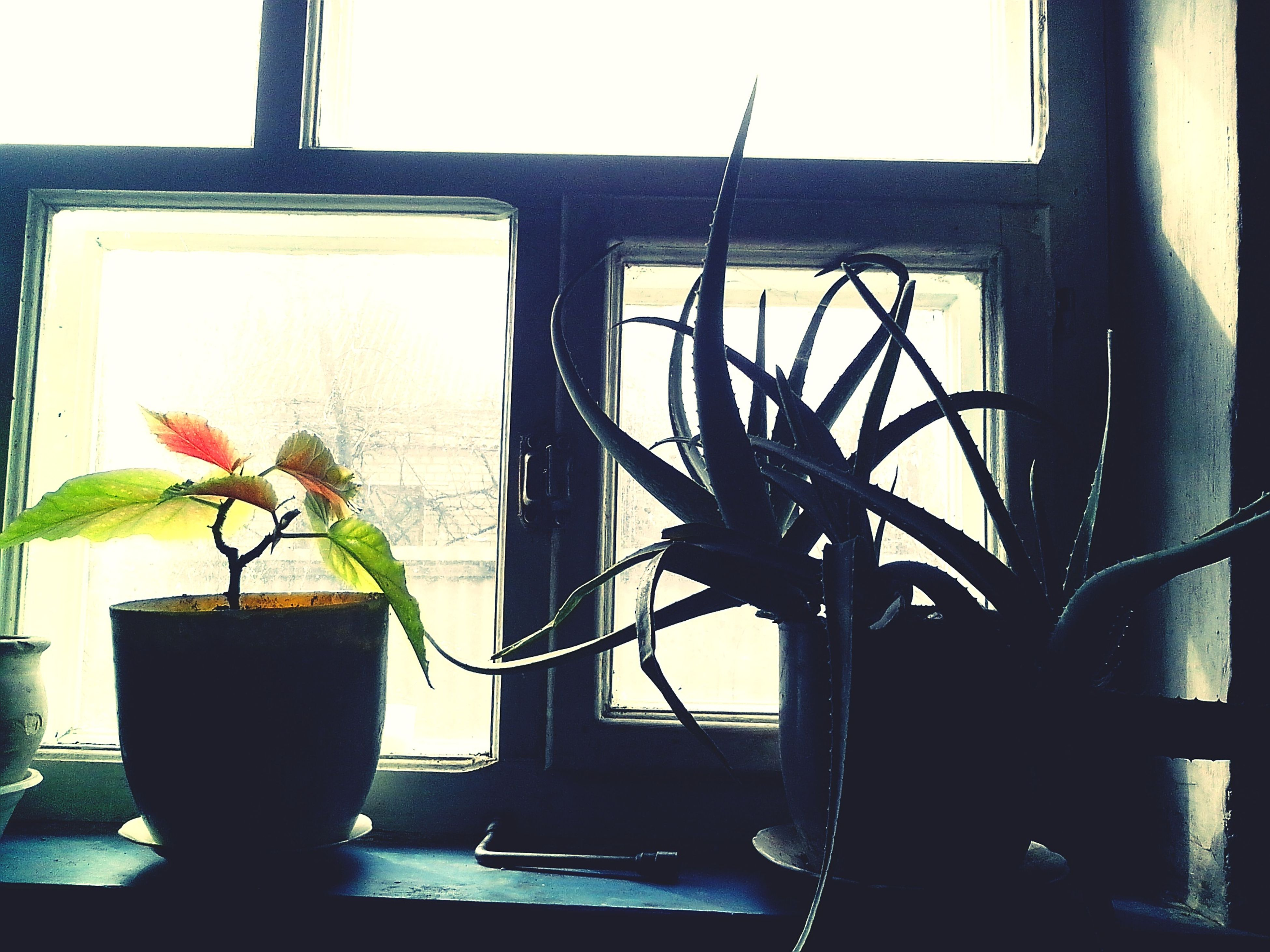 window, indoors, potted plant, plant, window sill, home interior, built structure, architecture, glass - material, growth, table, wall - building feature, house, wall, sunlight, flower, vase, day, no people, close-up