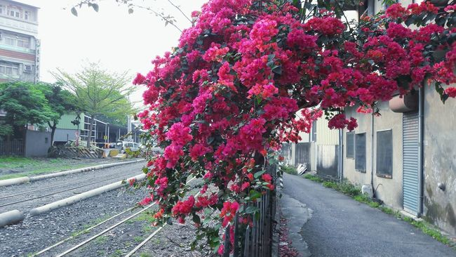 Showcase April Beside The Road Flourishing Vibrantvibes Breeze Fences Taiwan Photography Tree Branches Sky And Trees