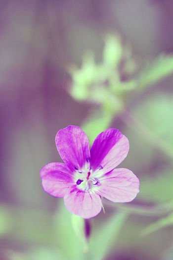 Bright Colors Bright Light Floral Perfection Macro Photography Beauty In Nature Blossom Bright Colours Close-up Floral Floral Photography Flower Flower Head Flower Photography Fragility Front Focus Green Background Macro Macro Flower Nature Plant Plant Photography Purple Blossoms Purple Flower