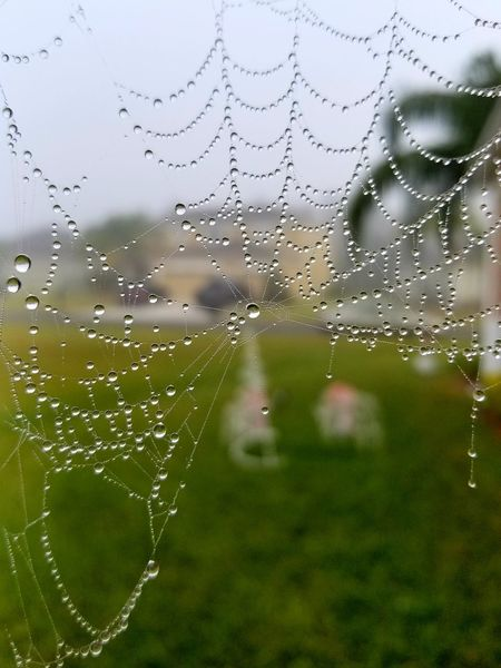 online web found this in my backyard today Drop Water No People Green Color Nature Close-up