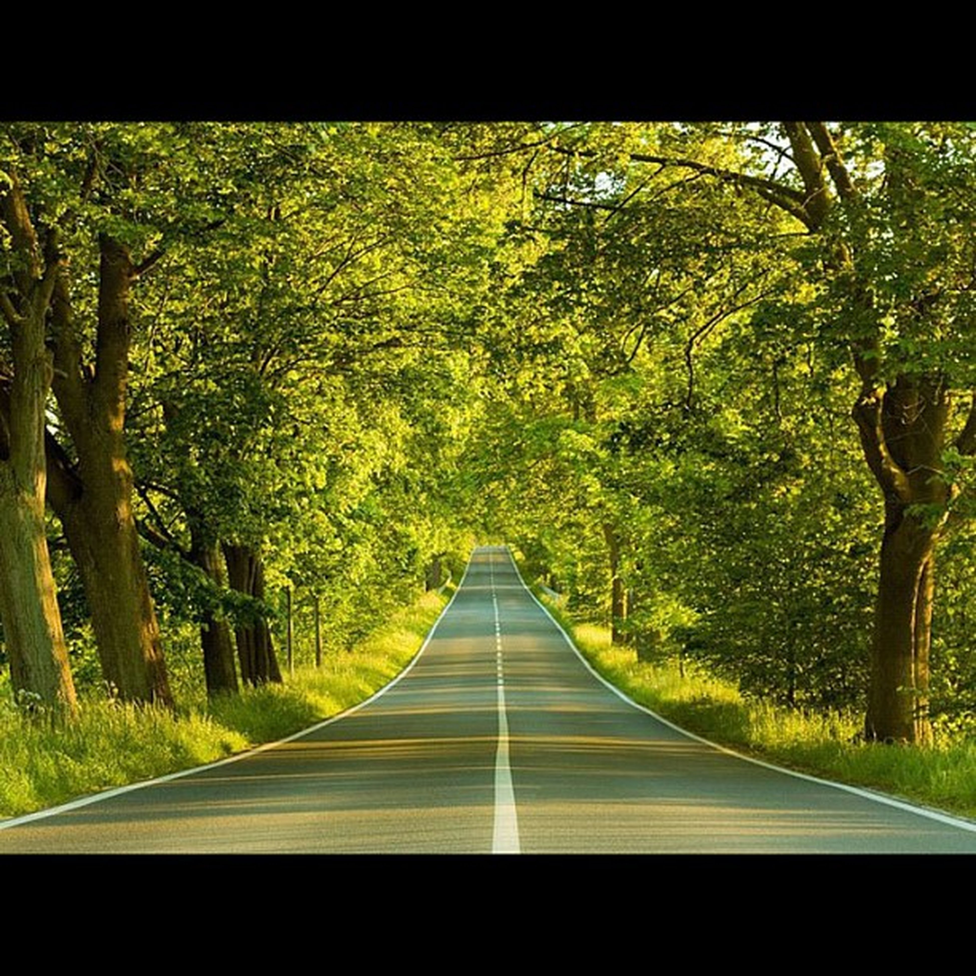 the way forward, tree, diminishing perspective, vanishing point, transfer print, transportation, growth, road, tranquility, nature, green color, tranquil scene, auto post production filter, sunlight, beauty in nature, empty, no people, day, forest, outdoors