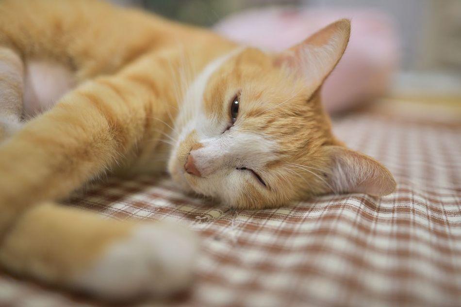 被写体に困った時のニャン頼み😹 EyeEm Animal Lover ウチの姫様 Cat Cat♡ Cat Lovers 家ニャン 茶トラ猫 The Purist (no Edit, No Filter) To Take Off Daily EyeEm Gallery