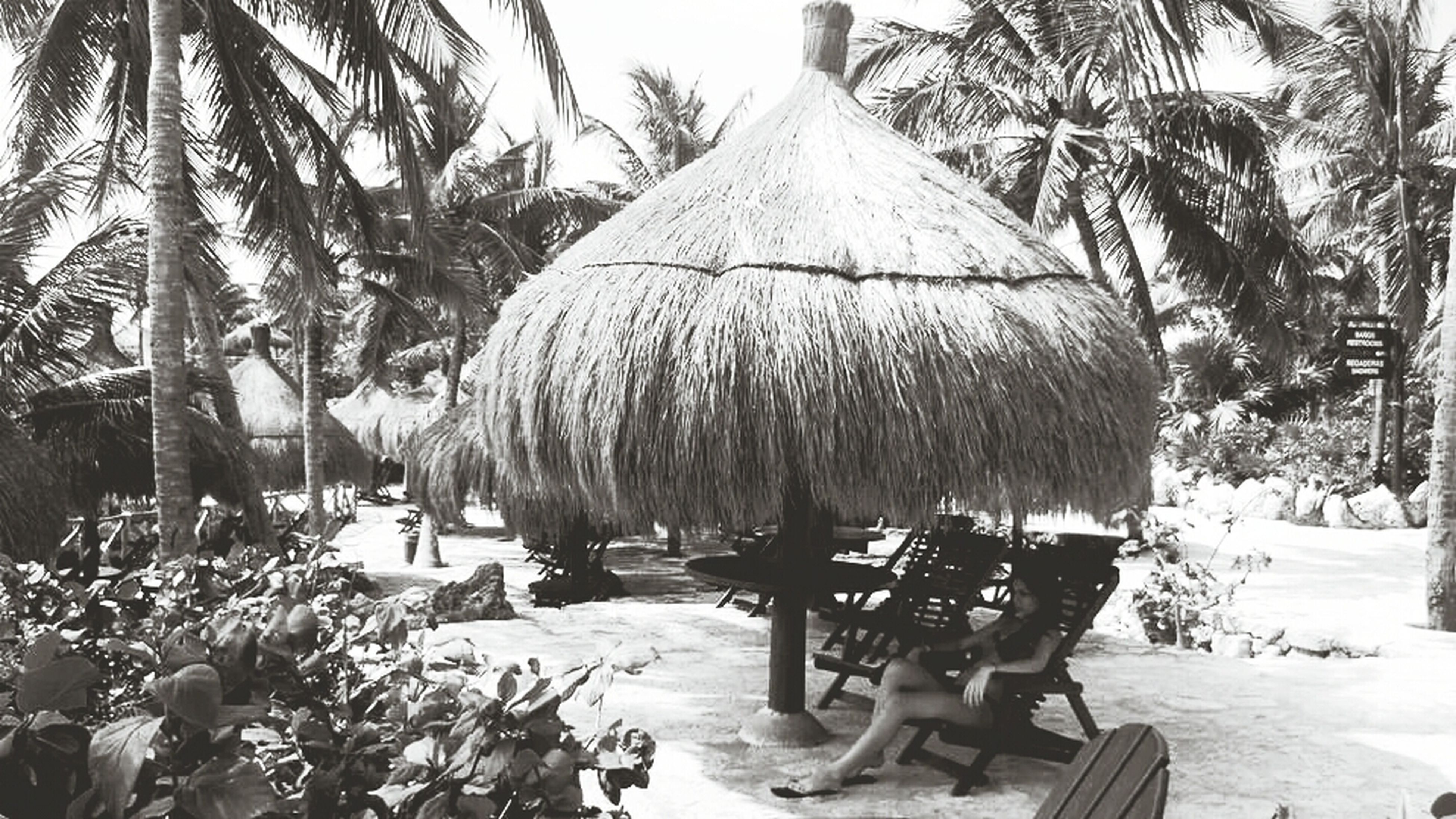 tree, palm tree, thatched roof, sunlight, chair, beach, shadow, nature, sand, growth, tranquility, day, built structure, lounge chair, building exterior, tree trunk, incidental people, absence, parasol, sea