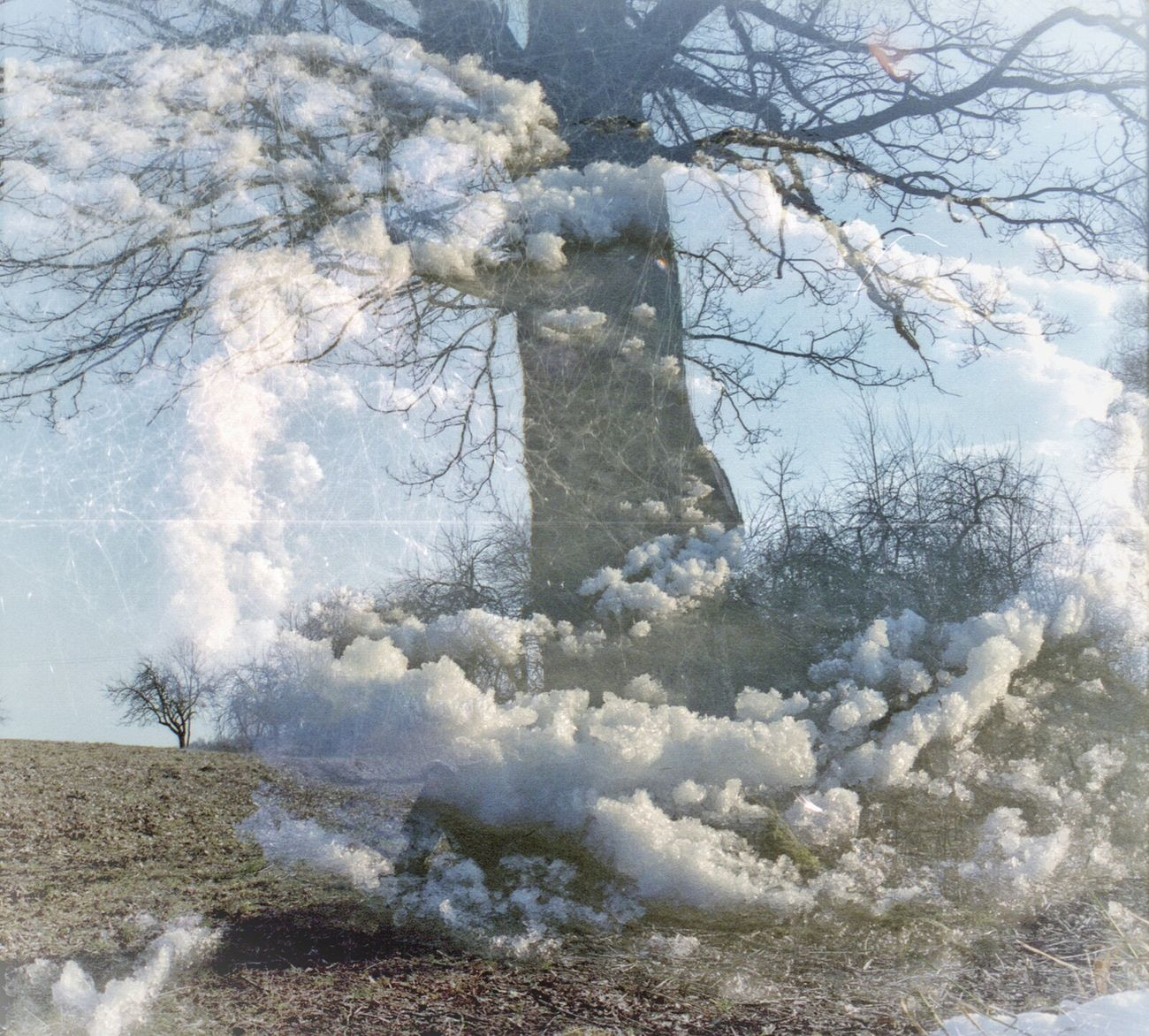 FilmSwap: My Tree in the Clouds (film swap with Gintarė Vilcinytė) Film Swap Analogue Photography Double Exposure Nature Tree Clouds Lithuania Multiexposure  Surreal