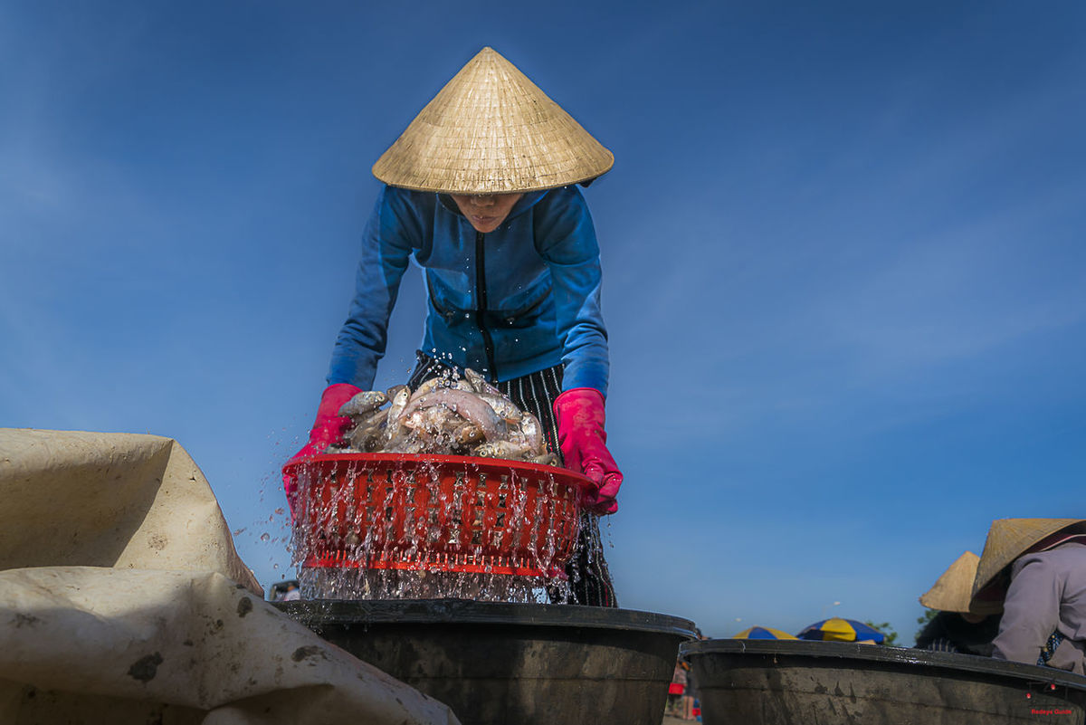 A lady washing the fish the she guted before paking and sending it to the vendor in City of Da Nang, Vietnam Asian Style Conical Hat Casual Clothing Cleaning Fish Da Nang, Vietnam Danang Day Fish Fisherman Jenantraveller Kapten Redeye Kaptenredeye Occupation One Person Outdoors People Real People Red Gloves Redeyeguide RedeyeXguide Sky Street Photography Streetphotography Travel Photography Women Working