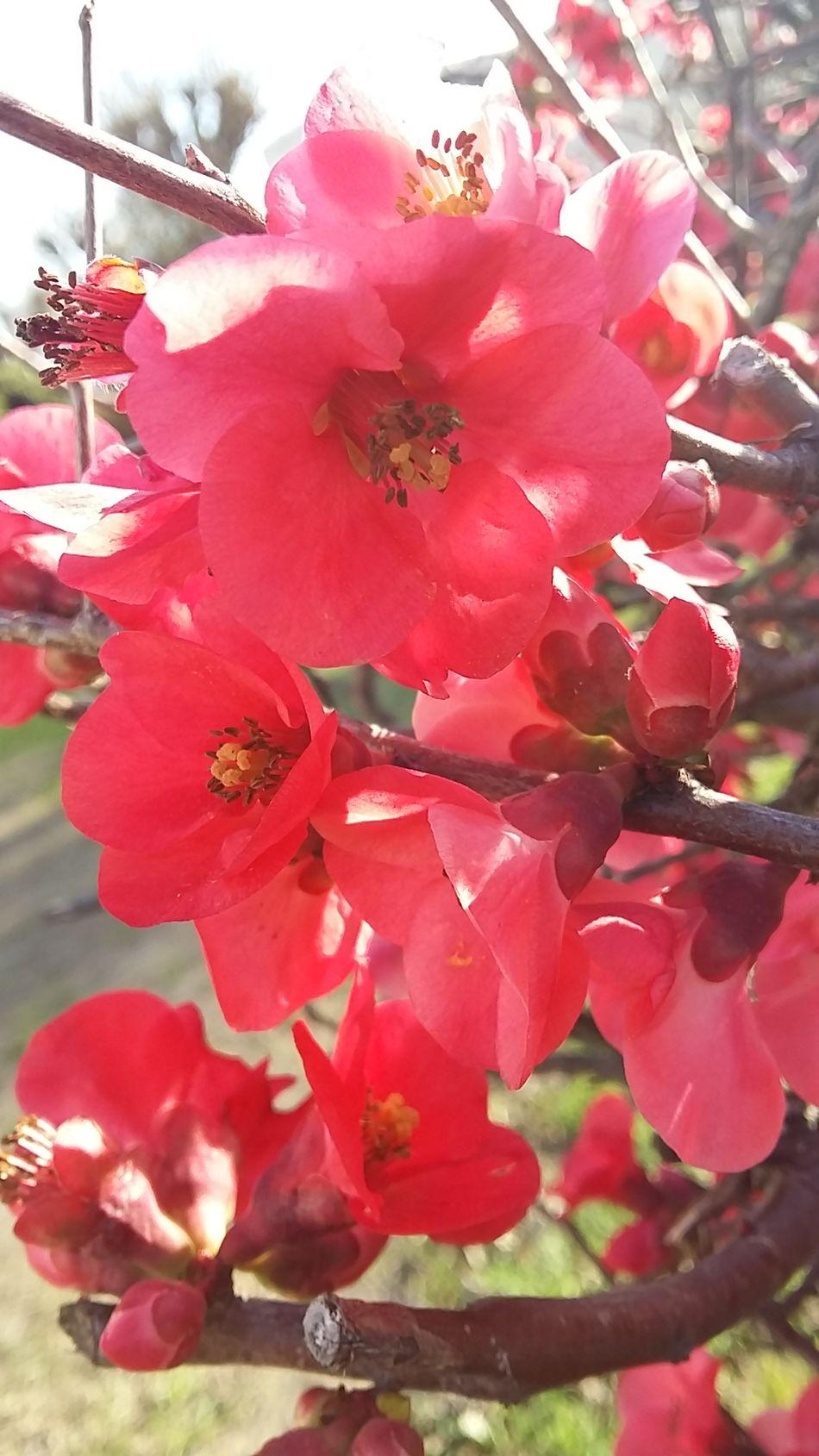 Taking Photos EyeEm Gallery Flowers, Nature And Beauty Flora Enjoying Life Flowersinyourhair